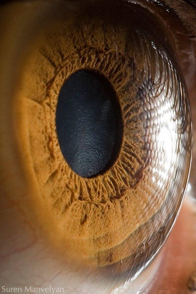 human-eye-macro-suren-manvelyan-3