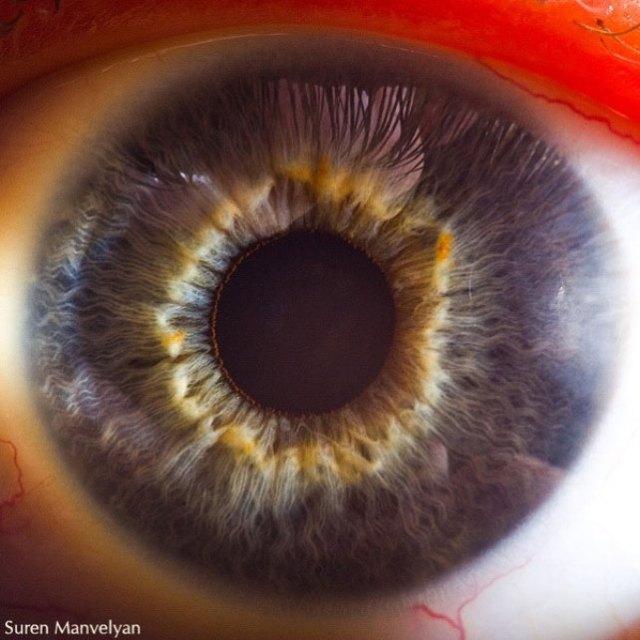 human-eye-macro-suren-manvelyan-4