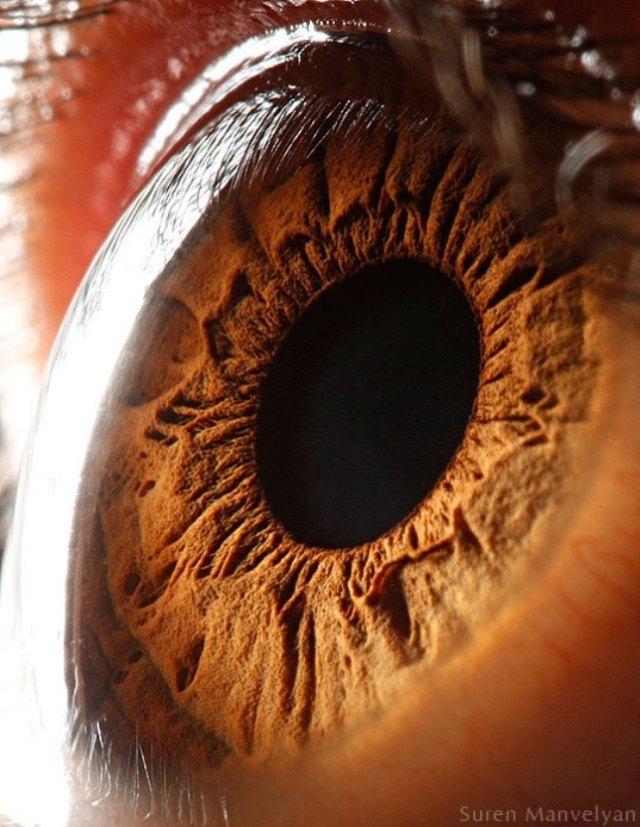 human-eye-macro-suren-manvelyan-5