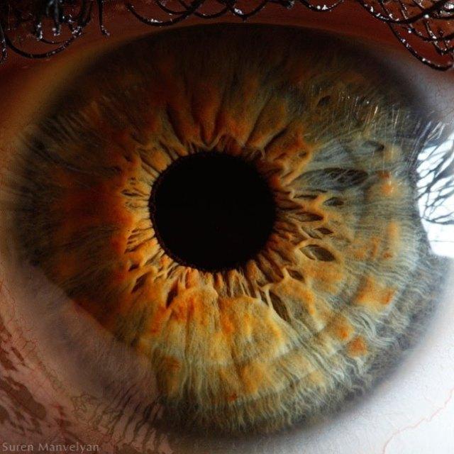 human-eye-macro-suren-manvelyan-6