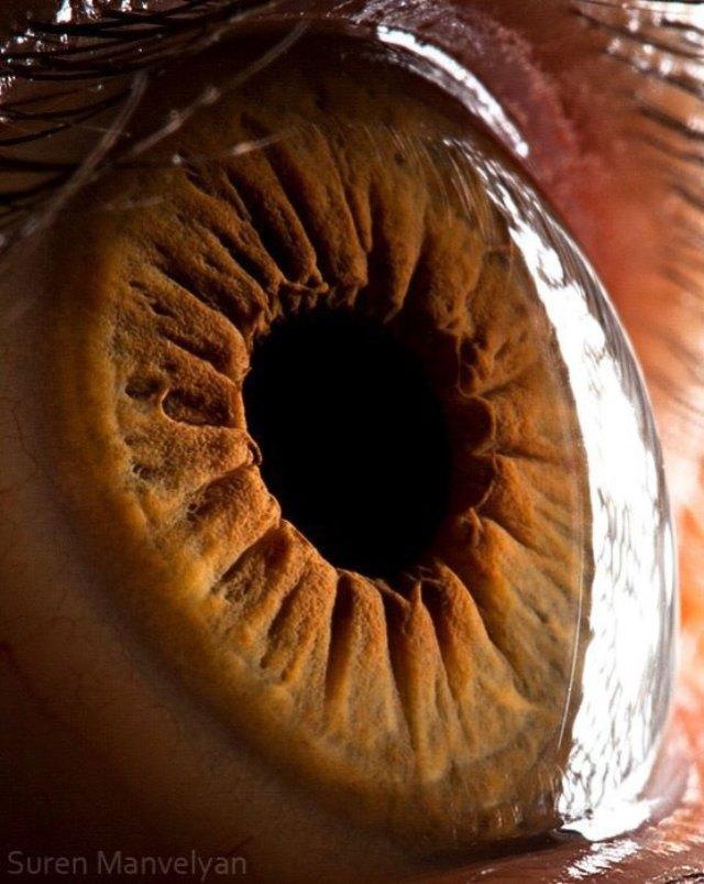 human-eye-macro-suren-manvelyan-7