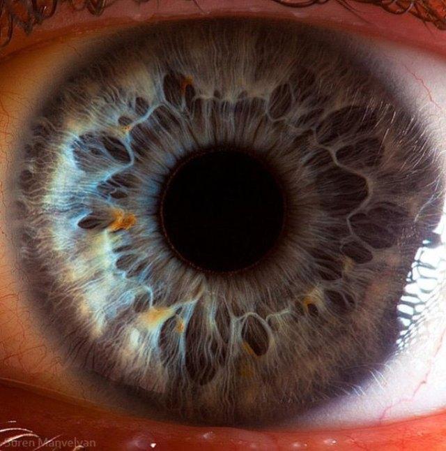 human-eye-macro-suren-manvelyan-8