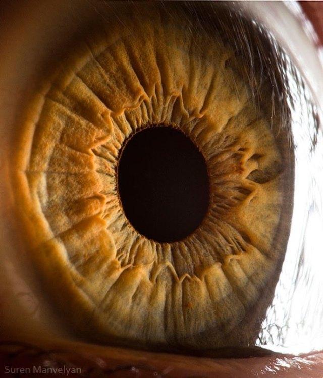 human-eye-macro-suren-manvelyan-9