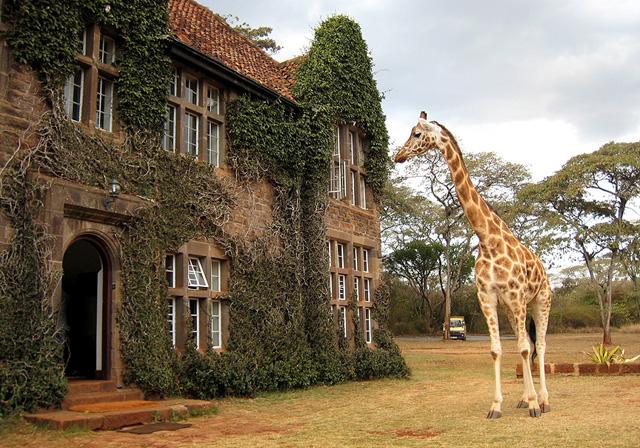 giraffemanor00