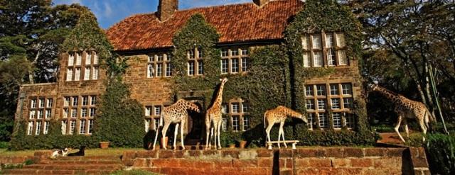 GiraffeManor10