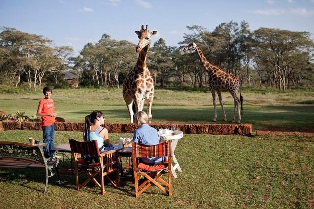 GiraffeManor15