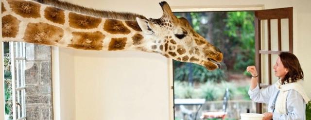 GiraffeManor3