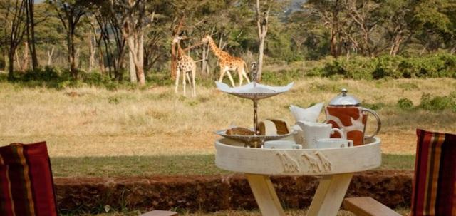 GiraffeManor6