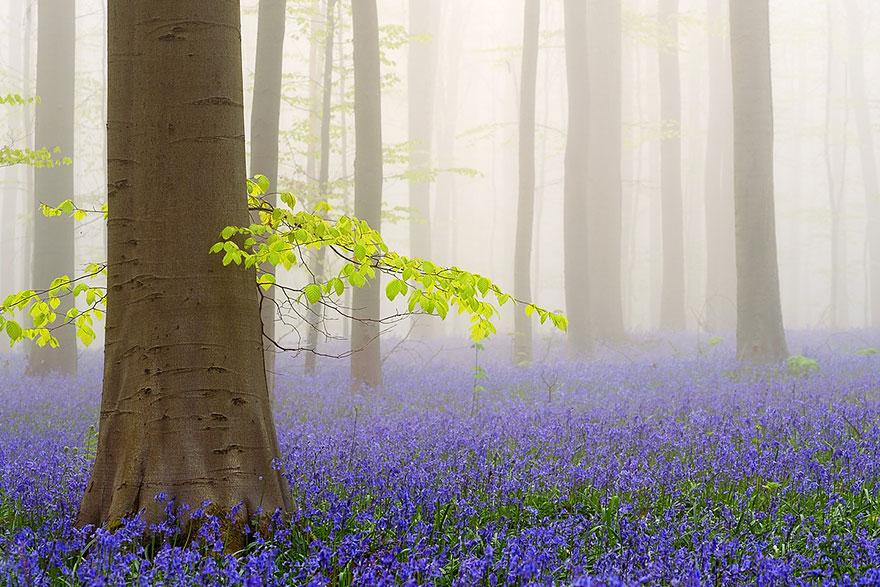 მისტიკური ტყე ბელგიაში