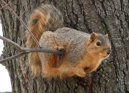bridge-for-squirrel-6
