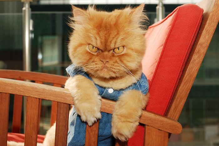 გარფი – ყველაზე საყვარელი ბრაზიანი კატა