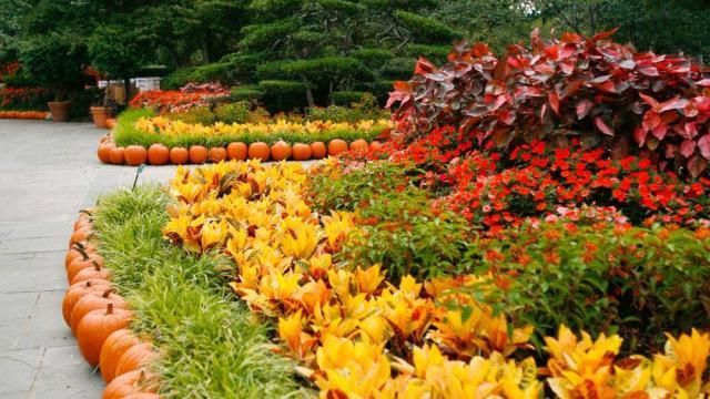 pumpkin-village-16