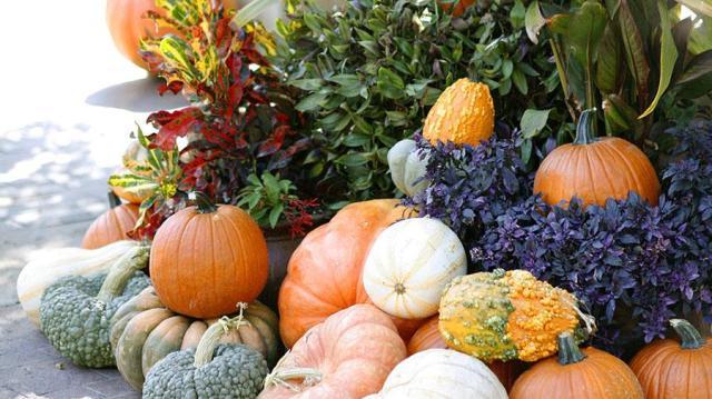 pumpkin-village-17