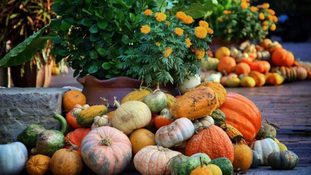 pumpkin-village-18