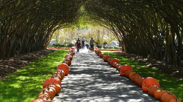 pumpkin-village-19