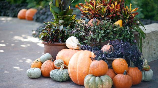 pumpkin-village-20