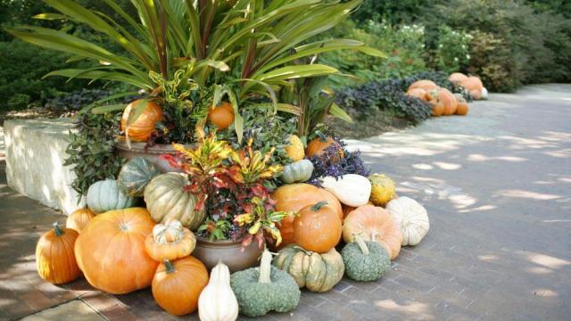 pumpkin-village-23