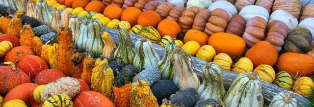 pumpkin-village-5