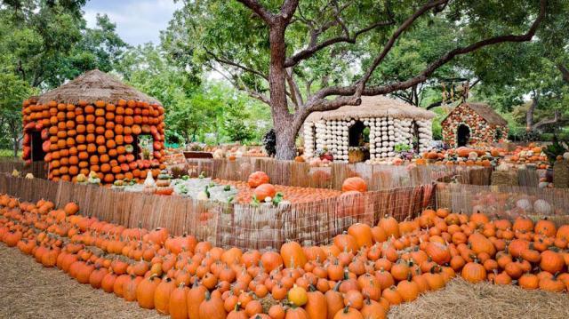 pumpkin-village-7