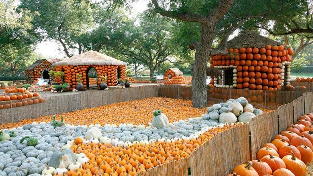 pumpkin-village-8