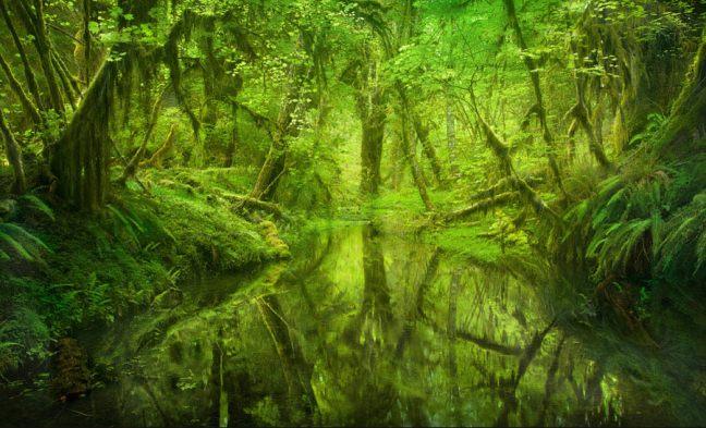 მსოფლიოს ულამაზესი ტყეები