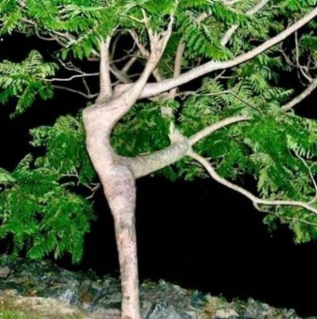 ბუნების ხუმრობა – მსოფლიოს უცნაური ხეები